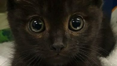 Cat Expressions Pictures Bilder 390x220 - Cat Expressions Pictures Bilder