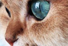 Cat Face Images Bilder 220x150 - Cat Face Images Bilder