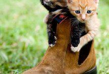 Cat Free Photo Bilder 220x150 - Cat Free Photo Bilder