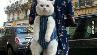 Cat Humor Images Bilder 390x220 - Cat Humor Images Bilder