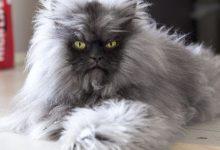Cat Image Gallery Bilder 220x150 - Cat Image Gallery Bilder