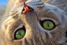 Cat Images Download Bilder 220x150 - Cat Images Download Bilder