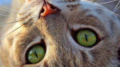 Cat Images Download Bilder 390x220 - Cat Images Download Bilder