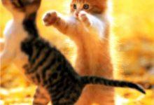 Cat Images Download Free Bilder 220x150 - Cat Images Download Free Bilder
