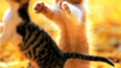 Cat Images Download Free Bilder 390x220 - Cat Images Download Free Bilder