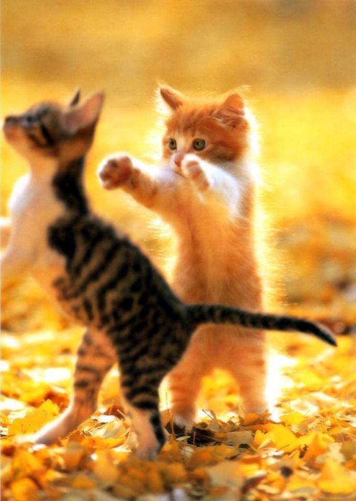 Cat Images Download Free Bilder - Cat Images Download Free Bilder