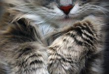 Cat Images Free Download Bilder 220x150 - Cat Images Free Download Bilder