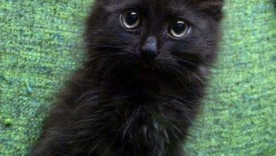 Cat Images Hd Wallpaper Bilder 390x220 - Cat Images Hd Wallpaper Bilder