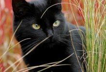 Cat Images With Captions Bilder 220x150 - Cat Images With Captions Bilder