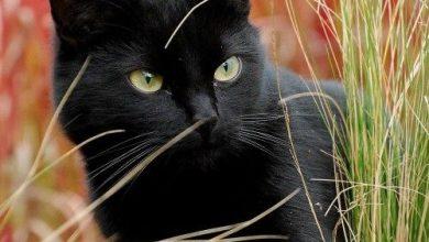 Cat Images With Captions Bilder 390x220 - Cat Images With Captions Bilder