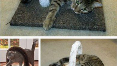 Cat Images With Quotes Bilder 390x220 - Cat Images With Quotes Bilder