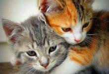 Cat Imegas Bilder 220x150 - Cat Imegas Bilder