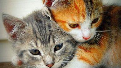 Cat Imegas Bilder 390x220 - Cat Imegas Bilder