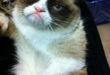 Cat In Photo Bilder 220x150 - Cat In Photo Bilder