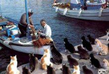 Cat Ka Photo Bilder 220x150 - Cat Ka Photo Bilder