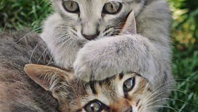 Cat Ki Pic Bilder 390x220 - Cat Ki Pic Bilder