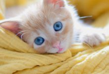 Cat Kitten Images Bilder 220x150 - Cat Kitten Images Bilder