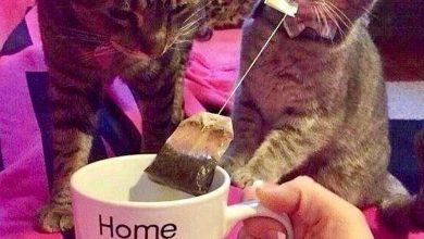 Cat Kitten Pictures Bilder 390x220 - Cat Kitten Pictures Bilder