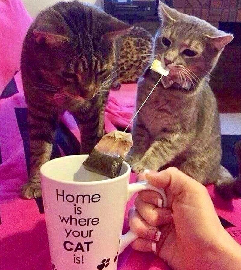 Cat Kitten Pictures Bilder - Cat Kitten Pictures Bilder