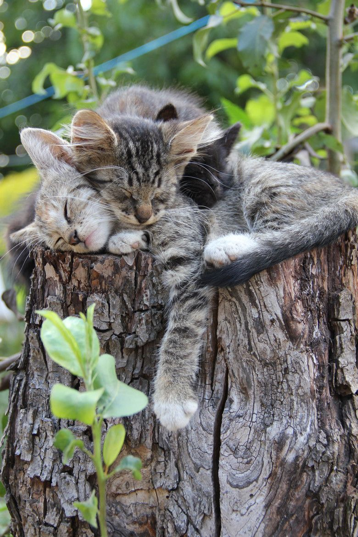 Cat Love Images Bilder - Cat Love Images Bilder