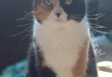 Cat Love Pic Bilder 220x150 - Cat Love Pic Bilder