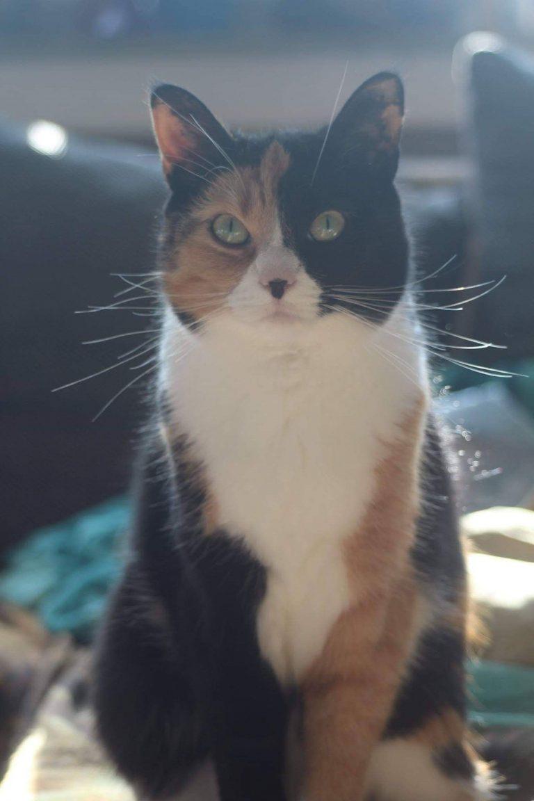 lustige katzenfotos mit sprüchen  bilder und sprüche für