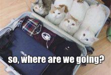 Cat Photes Bilder 220x150 - Cat Photes Bilder