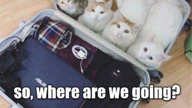 Cat Photes Bilder 390x220 - Cat Photes Bilder
