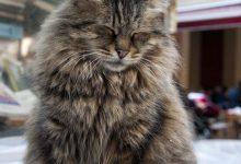 Cat Photo Captions Bilder 220x150 - Cat Photo Captions Bilder