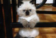 Cat Photo Image Bilder 220x150 - Cat Photo Image Bilder