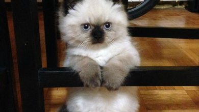 Cat Photo Image Bilder 390x220 - Cat Photo Image Bilder