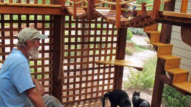 Cat Photos Pictures Bilder 390x220 - Cat Photos Pictures Bilder