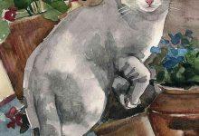 Cat Pic Beautiful Bilder 220x150 - Cat Pic Beautiful Bilder
