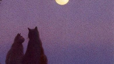 Cat Pic Of The Day Bilder 390x220 - Cat Pic Of The Day Bilder