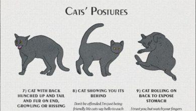 Cat Pick Bilder 390x220 - Cat Pick Bilder