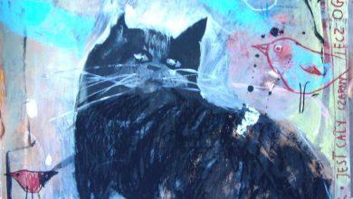 Cat Pics And Quotes Bilder 390x220 - Cat Pics And Quotes Bilder