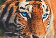 Cat Pics Hd Bilder 220x150 - Cat Pics Hd Bilder
