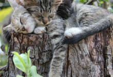 Cat Pics With Captions Bilder 220x150 - Cat Pics With Captions Bilder