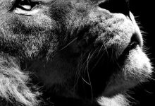Cat Pics With Words Bilder 220x150 - Cat Pics With Words Bilder
