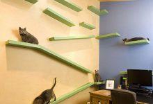 Cat Picther Bilder 220x150 - Cat Picther Bilder