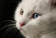 Cat Pictures Free Bilder 220x150 - Cat Pictures Free Bilder