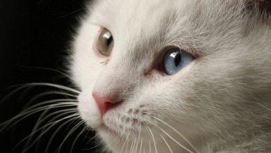 Cat Pictures Free Bilder 390x220 - Cat Pictures Free Bilder