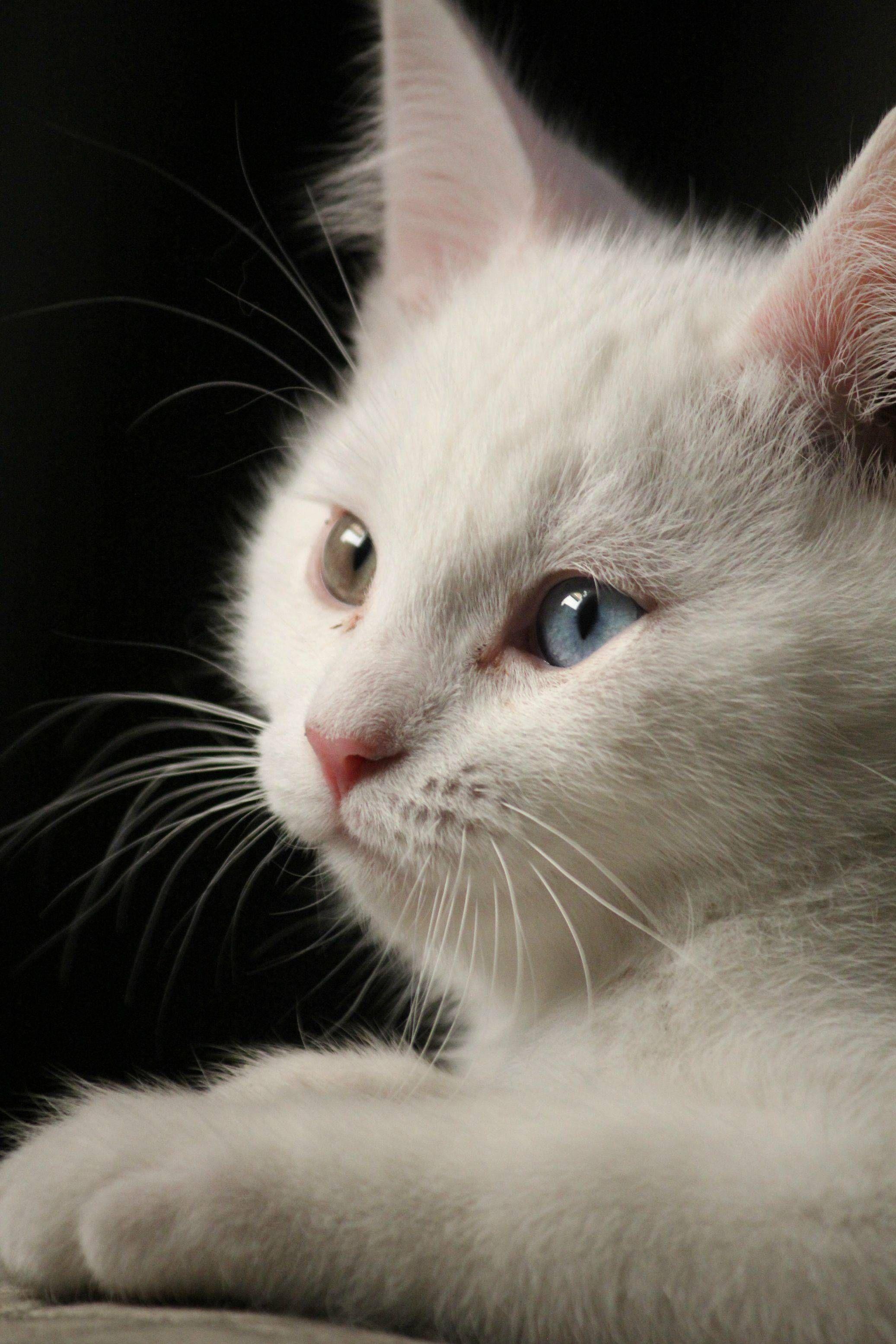 Cat Pictures Free Bilder - Cat Pictures Free Bilder