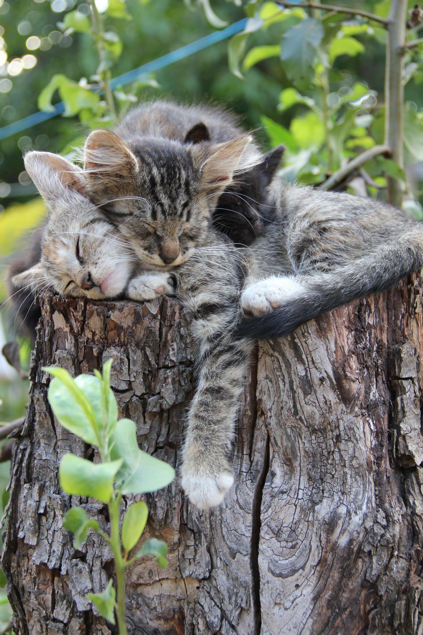 Cat Pictures To Print Bilder - Cat Pictures To Print Bilder