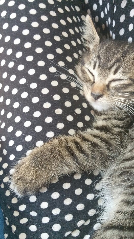 Cat Pitchers Bilder - Cat Pitchers Bilder