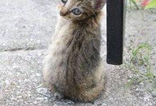 Cat Pix Bilder 220x150 - Cat Pix Bilder