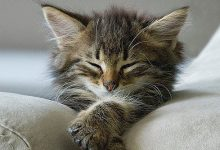 Cat With Kittens Images Bilder 220x150 - Cat With Kittens Images Bilder