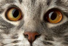 Cates Images Bilder 220x150 - Cates Images Bilder