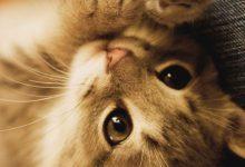 Cats Cute Pic Bilder 220x150 - Cats Cute Pic Bilder