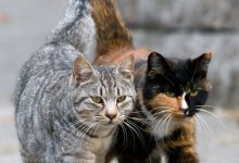 Cats Fotos Bilder 220x150 - Cats Fotos Bilder